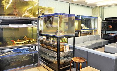 水族館みたいな内科医院