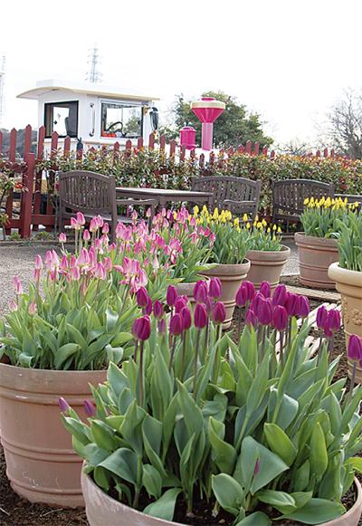 花の国に春の色
