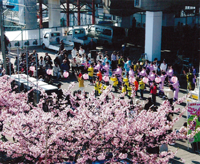 一千本の河津桜