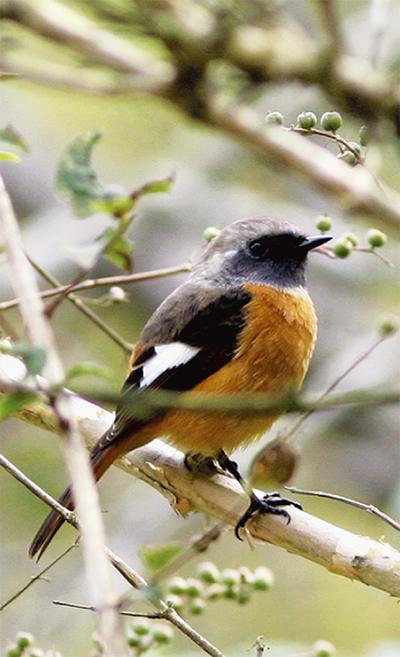 冬の野鳥を探してみよう