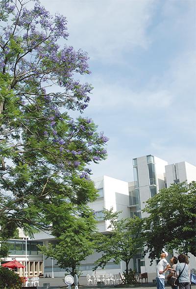 薄紫の花 散りながら咲く