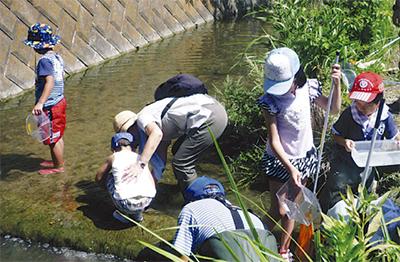前田川で生き物探し