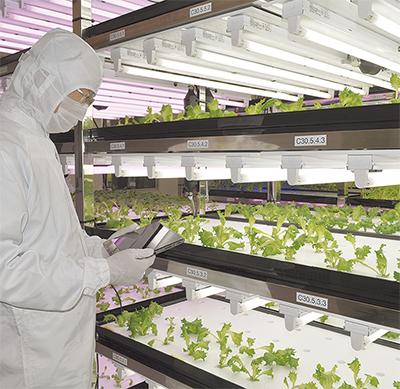光技術で野菜栽培
