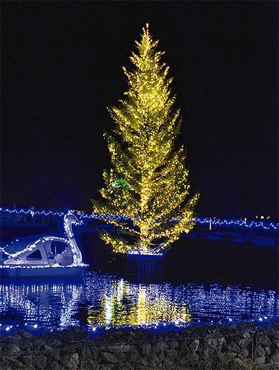 湖面照らすツリーイルミ