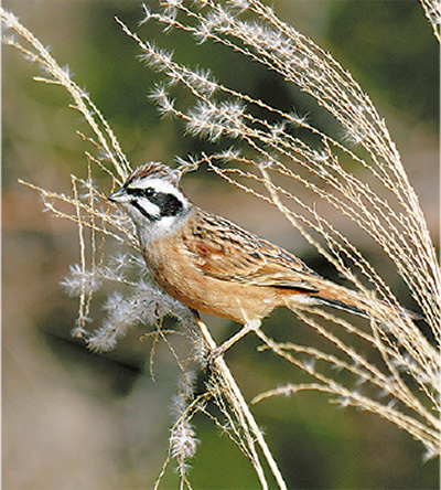 冬の野鳥観察会