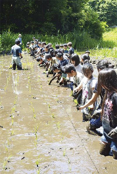 泥まみれで田植え
