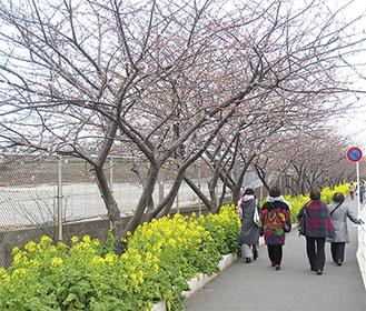 開花が進んでいる木もちらほら(3月4日撮影)