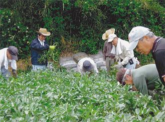 農作業を楽しむ参加者