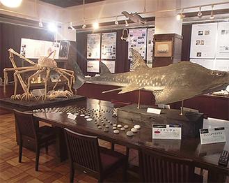 海洋生物の標本ほかが展示されている同実験所の展示室