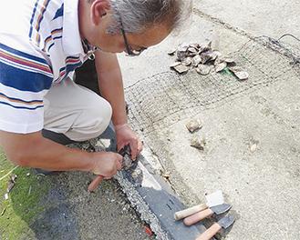 アコヤ貝の良好な生育の妨げになるフジツボなどの付着物を清掃する出口さん
