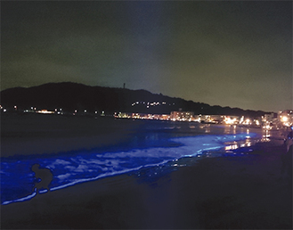 ライトアップされた波打ち際(写真は8月開催の様子)