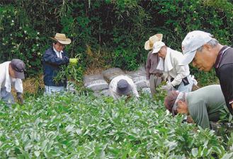 実習で栽培方法を学ぶ参加者