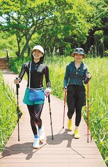 小網代の森を歩く女性参加者