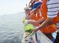 稚魚放流体験