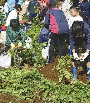 収穫体験を楽しむ参加者たち