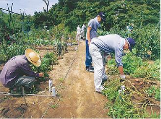 畑での栽培実習の様子