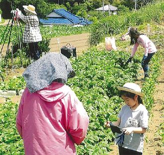 種まきから収穫まで体験