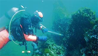 ダイバーによる潜水活動(写真提供/城ヶ島漁協)