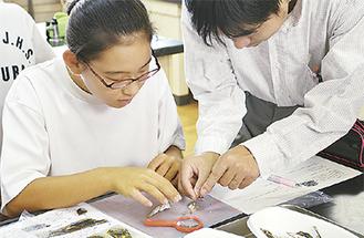 解剖した部位を観察する生徒