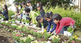 一つひとつ花壇に苗を植える子どもたち