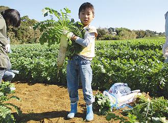 旬の新鮮野菜を収穫(写真はイメージ)
