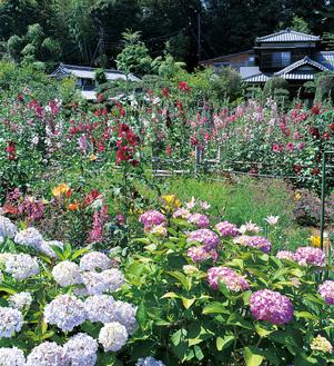 色とりどりの花畑が広がる(今月4日撮影)