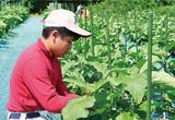 農・水産業の担い手育成
