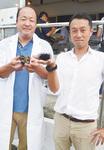 共同研究を行っている水産技術センターの臼井さん(写真左)と三崎恵水産の石橋さん