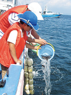 船上で稚魚放流体験