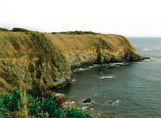 ウミウの生息する赤羽海岸の崖地