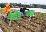 毘沙門の畑で丸1日農作業を行った