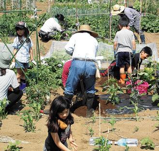 種まきから収穫まで野菜づくりを体験