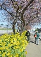 早春彩る桜まつり