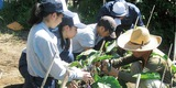 三浦初声高生と農業学ぶ