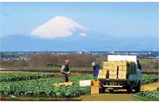 昨年度の最優秀賞「収穫期(春キャベツ)」