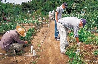 実習地での野菜栽培の様子