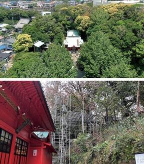 昨年6月頃に撮影された鎮守の森=写真上=と、今年2月の伐採作業の様子(神社提供)