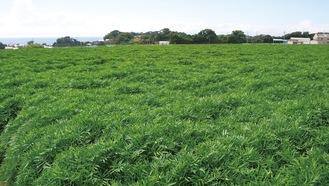 三戸の農地に広がる「エバーグリーン畑」