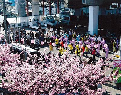 1千本の河津桜がお出迎え