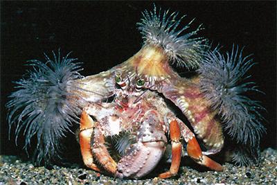 海の生物のエコライフ