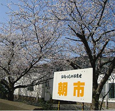 4月はお得な桜まつり