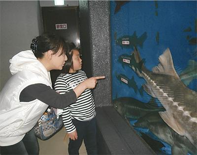 古代ザメの歴史を紹介