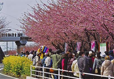 観光写真で三浦をPR