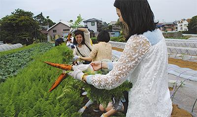 三浦で収穫体験