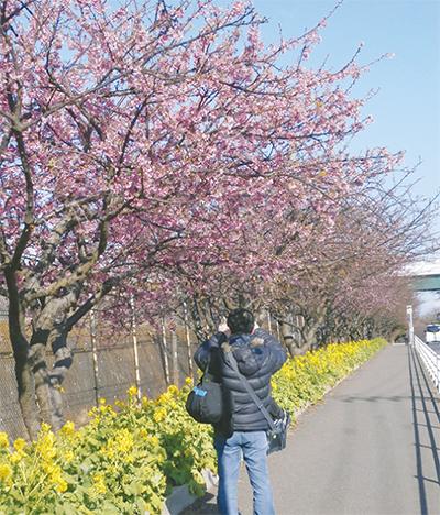 河津桜で春先取り