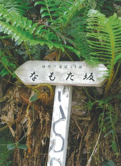 三浦の散歩道  〈第82回〉