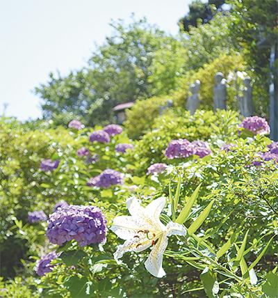 初夏の開花リレー