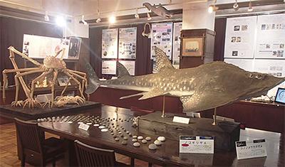 海洋生物の標本公開