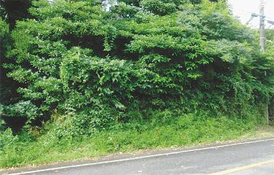 三浦の散歩道  〈第87回〉