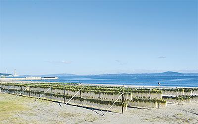 """砂浜に連なる""""白いカーテン"""""""